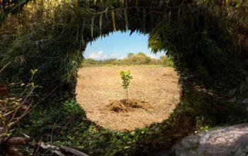 Immagine Dove i frutti nasceranno