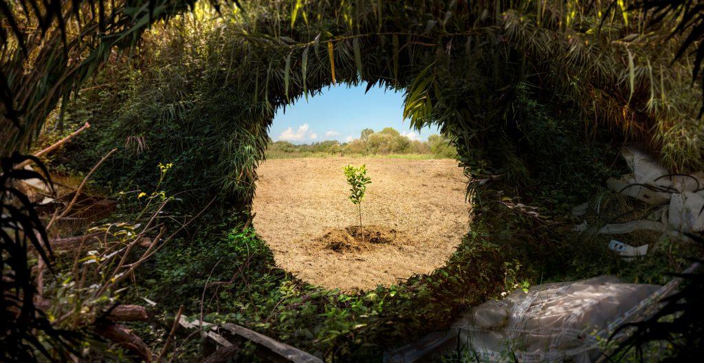 Dove i frutti cresceranno, © Olmo Amato